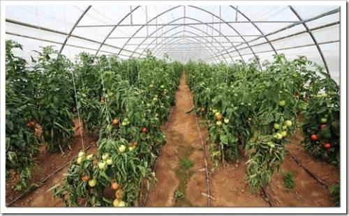 Способы развития овощеводства