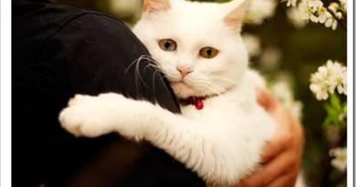 Симптомы болезней домашних кошек