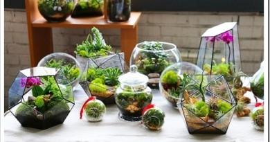 Необычная доставка цветов в стекле на дом – популярность услуги
