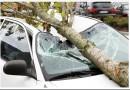 Советы юриста — что делать, если на автомобиль упало дерево