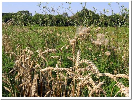 Эффективные гербициды в борьбе с сорной травой