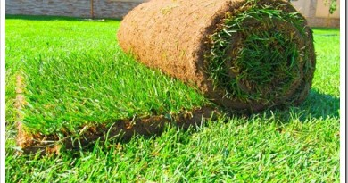 Существующие разновиды рулонного газона