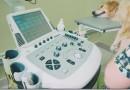 Особенности выбора УЗИ-оборудования для животных