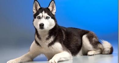 Какие вопросы стоит задать себе перед покупкой собаки?